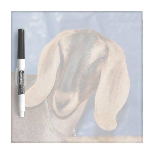 Nubian doe head against blue Dry-Erase board