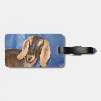 Nubian doe head against blue luggage tags