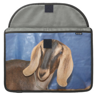Nubian doe head against blue sleeve for MacBook pro
