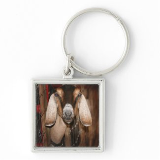 Nubian doe head on getting out of gate keychains