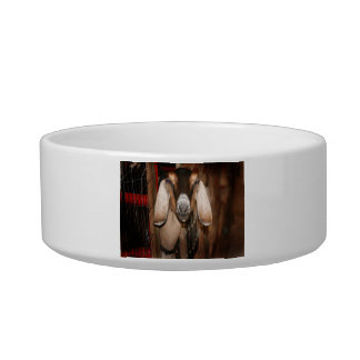 Nubian doe head on getting out of gate pet water bowls