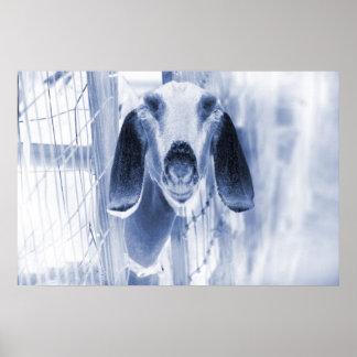 Nubian doe head on invert posters