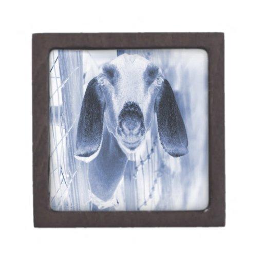 Nubian doe head on invert premium trinket boxes