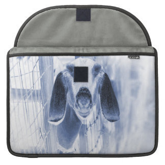 Nubian doe head on invert sleeve for MacBook pro