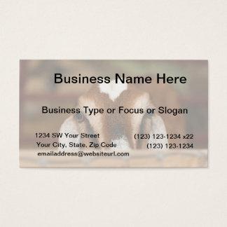 Nubian doe peeking over wooden rail business card