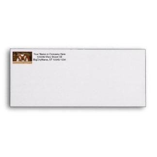 Nubian doe peeking over wooden rail envelopes