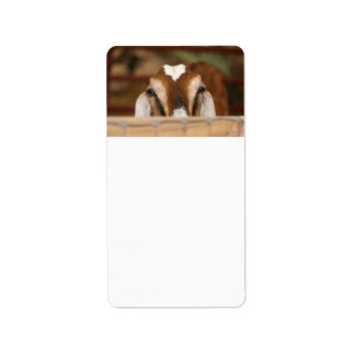 Nubian doe peeking over wooden rail label