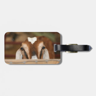 Nubian doe peeking over wooden rail tag for bags