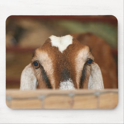 Nubian doe peeking over wooden rail mousepad