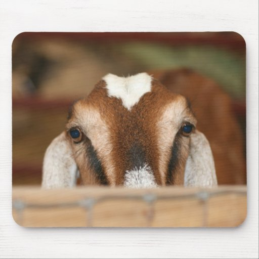 Nubian doe peeking over wooden rail mousepad
