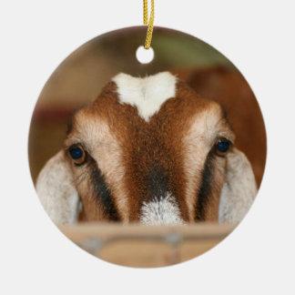 Nubian doe peeking over wooden rail ornaments