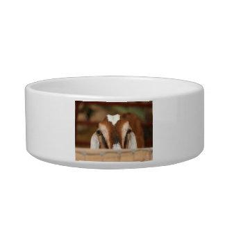 Nubian doe peeking over wooden rail pet food bowls