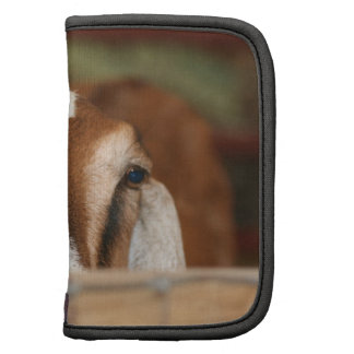 Nubian doe peeking over wooden rail organizer