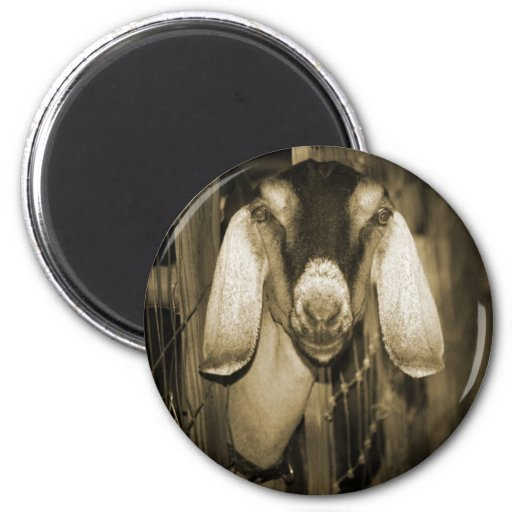 Nubian doe sepia head on getting out of gate fridge magnet