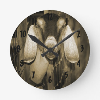 Nubian doe sepia head on getting out of gate round clock