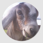 Nubian Goat Classic Round Sticker