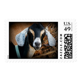 Nubian Goat Color Photo Postage Stamp