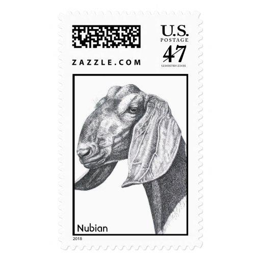 head nubian