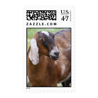 Nubian Nanny Goat Postage