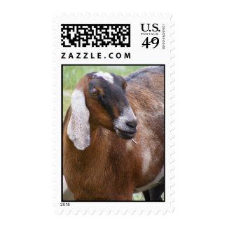 Nubian Nanny Goat Stamp