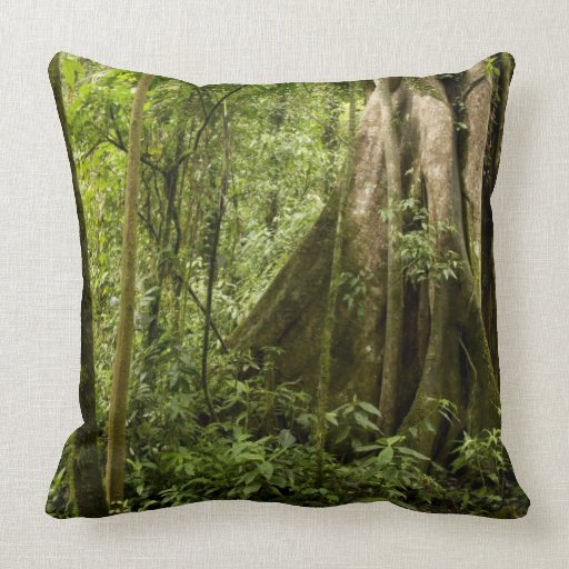 Núblese el bosque, Bosque de Paz, Costa Rica Cojin