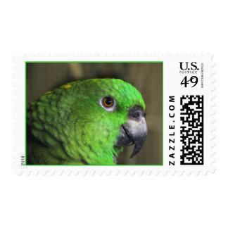 Nuca amarilla el Amazonas (medio) Sello Postal