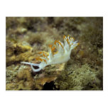 Nudibranch Cartoes Postais