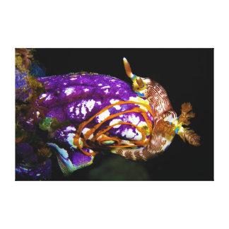 Nudibranch Laying Egg Sea Squirt Polycarpa Aurata Canvas Print