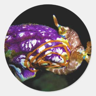 Nudibranch Laying Egg Sea Squirt Polycarpa Aurata Classic Round Sticker