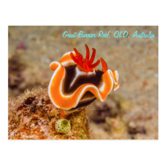 Nudibranch on the Great Barrier Reef Postcard