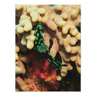Nudibranch on the Reef Poster