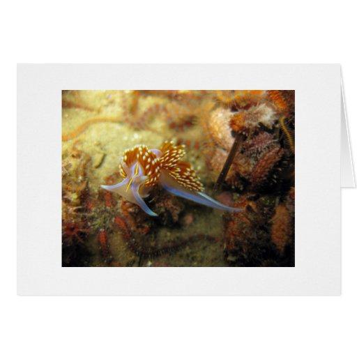 Nudibranch opalescente tarjetón