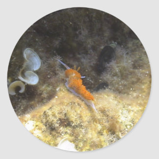 Nudibranch Pegatina Redonda