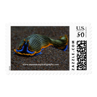 Nudibranch Postage Stamps