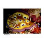 Nudibranch Postales