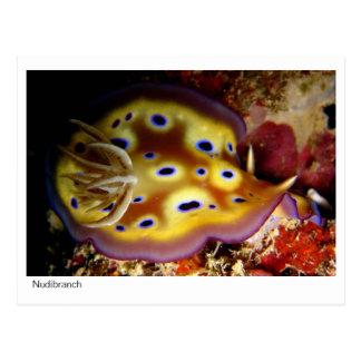 Nudibranch Postcard