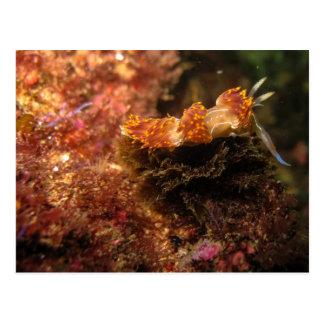 Nudibranch Post Card