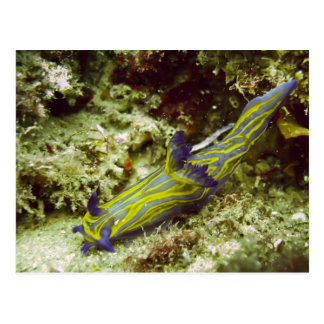 Nudibranch Postcard