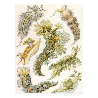 Nudibranchia del vintage, barras de mar de Ernst Tarjetas Postales
