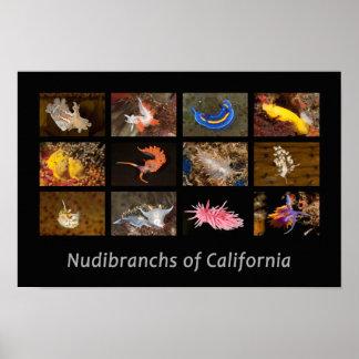 Nudibranchs del poster de California Póster