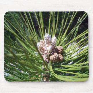 Nueces del cono del pino tapetes de raton