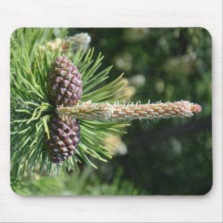 Nueces del cono del pino alfombrilla de ratón