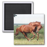 ¡Nuestro caballo excelente que se divierte! Imán De Nevera