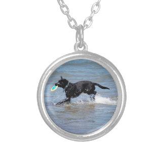 Nuestro Labrador negro que recupera el disco volad Grimpolas Personalizadas