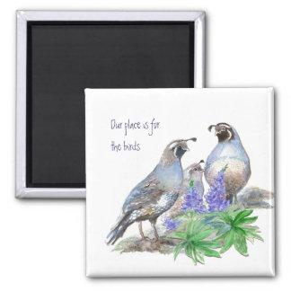 Nuestro lugar está para los pájaros, codornices de imán cuadrado