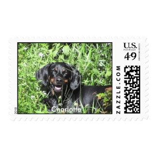 Nuestro sello de Charlotte