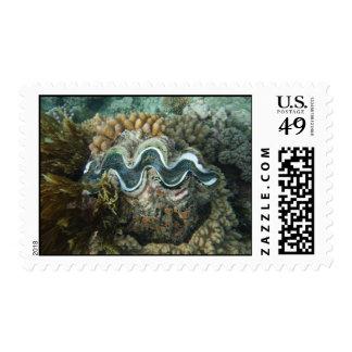 nuestro último recurso timbres postales