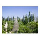 Nueva Caledonia, grande isla de Terre, Noumea. Postal