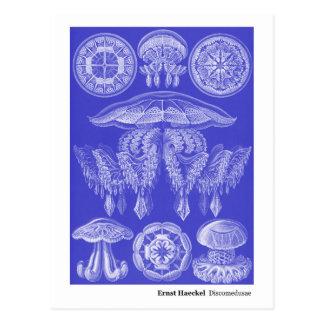 Nueva dirección de Ernst Haeckel Discomedusae III Postal