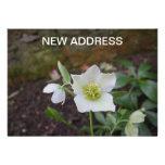 Nueva dirección de la flor hermosa de la primavera anuncio